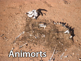 Animorts